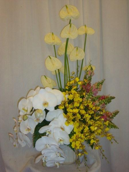 Hoa tang xep