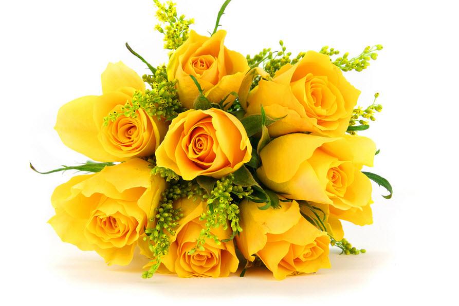 Hoa hồng vàng đẹp nhất thế giới 4