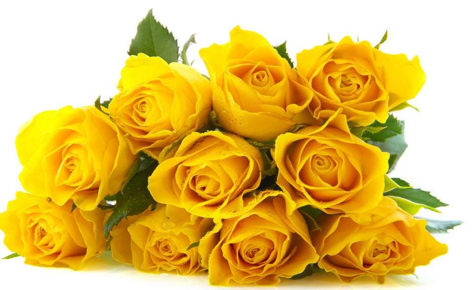 Hoa van dep trong yahoo dating 8